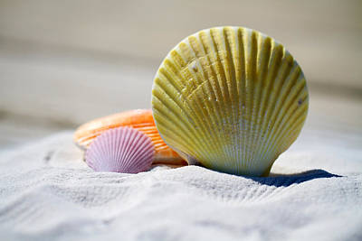 Photograph - Shells by Julia Roman