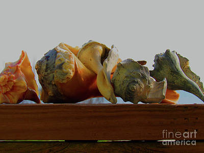 Photograph - Shells Of The Sea In Orange And Gray by Roberta Byram