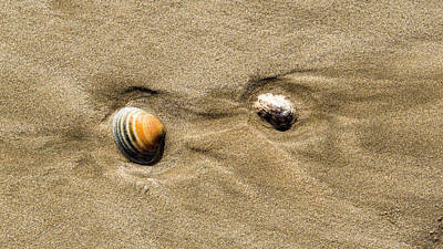 Photograph - Shells On Beach by Steven Ralser