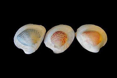 Photograph - Shells On Black Background by Angela Murdock