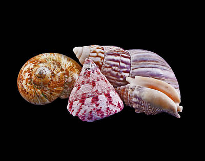 Art Print featuring the photograph Shells On Black by Bill Barber