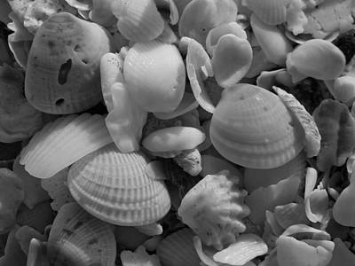 Florida Photograph - Shells On Bowman Beach by Juergen Roth