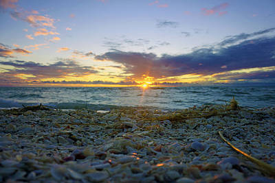 Shells On The Beach At Sunset Art Print