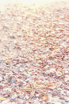 Photograph - Shells On The Beach by Framing Places