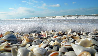 Photograph - Shells On The Beach by Sean Allen
