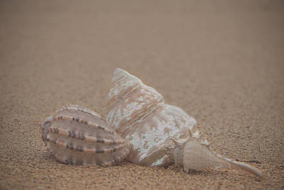Photograph - Shells On The Beach by Teresa Wilson