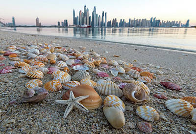 Shells On The Beach.  Art Print