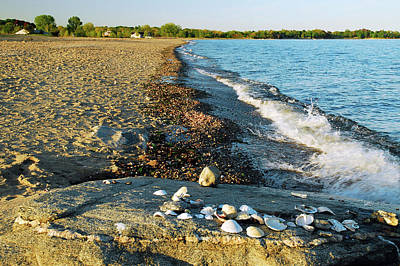 Photograph - Shells On The Shore by James Kirkikis