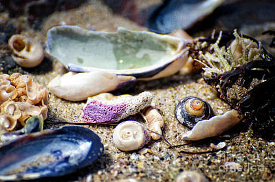 Photograph - Shells On The Shore by Jim And Emily Bush