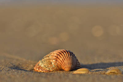 Photograph - Shells On The Shore by Marek Stepan