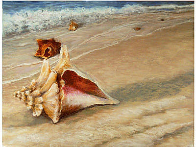 Painting - Shells On The Shore by Susan Jenkins