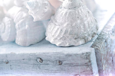 Photograph - Shells On Wooden Crate by Bonnie Bruno