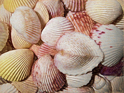 Photograph - Shells Painterly by Mary Bedy