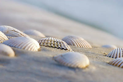 Oyster Photograph - Shells  by Peter Tellone