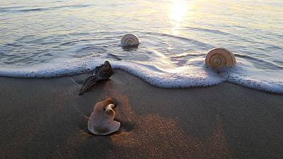 Beach Photograph - Shells Seashore Sunrise by Robert Banach