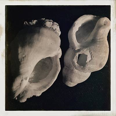 Photograph - Shells by Susan Detroy