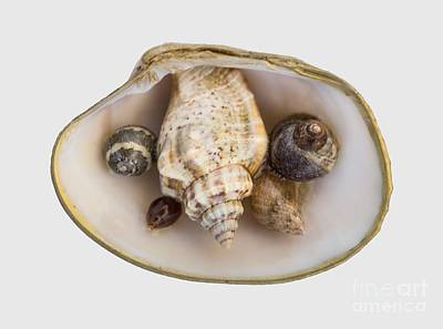 Photograph - Shells Within A Sea Shell by Em Witherspoon