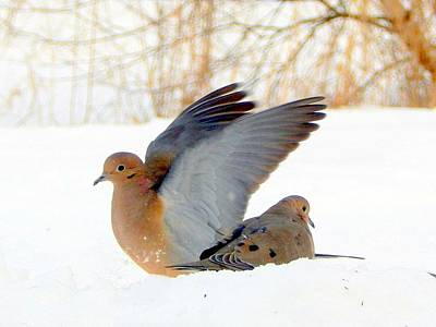 Mourning Dove Photograph - Shelter From The Cold by Karen Cook
