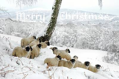 Photograph - Sheltering Flock - Merry Christmas by John Kelly