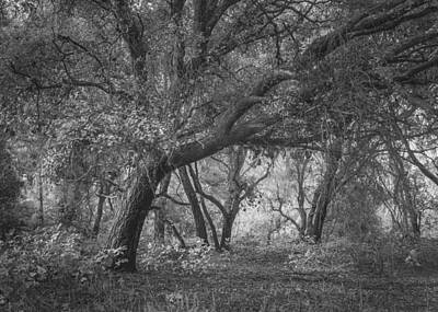 Photograph - Sheltering Oaks by Alexander Kunz