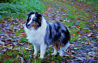 Photograph - Sheltie 18518 by Ray Shrewsberry