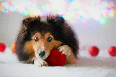 Painting - Sheltie With A Red Ball - Painted by Ericamaxine Price