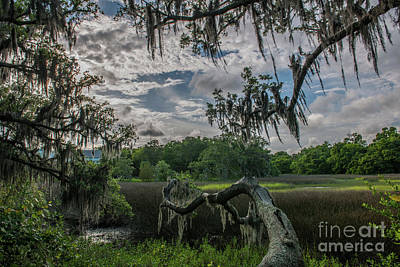 Photograph - Shem Creek Salt Marsh Patina by Dale Powell