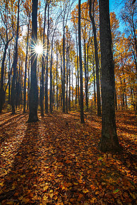 Photograph - Shenandoah Forest by Ross Henton