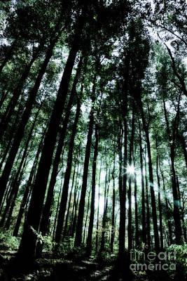 Aperture Photograph - Shenandoah Green by Irene Abdou