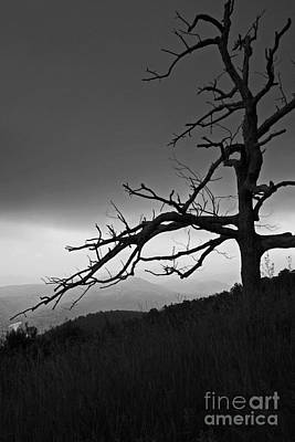 Photograph - Shenandoah  by Julie Lueders