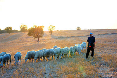 Photograph - Shepherd And Flock Of Sheep by Lilia D