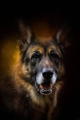 Photograph - Shepherd Glow by Jai Johnson