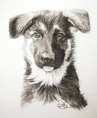 Drawing - Shepherd In Training by Rachel Hames
