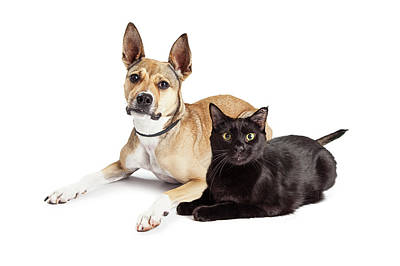 Photograph - Shepherd Mix Dog And Black Cat Laying Together by Susan Schmitz