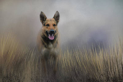 Dogs In Art Photograph - Shepherds Journey by Jai Johnson