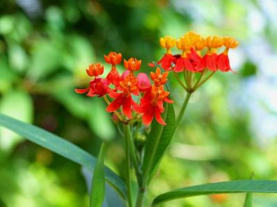 Photograph - Sherbet Flower by Michiale Schneider