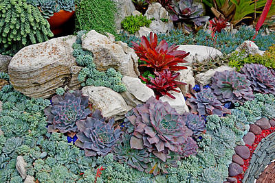 Photograph - Sherman Gardens Study 2 by Robert Meyers-Lussier