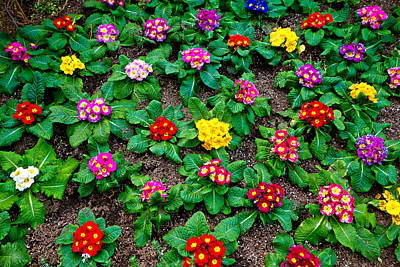 Photograph - Sherman Gardens Study 29 by Robert Meyers-Lussier