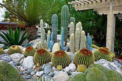 Photograph - Sherman Gardens Study 37 by Robert Meyers-Lussier