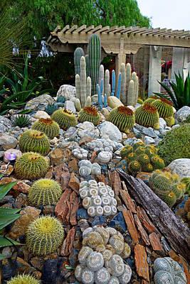 Photograph - Sherman Gardens Study 39 by Robert Meyers-Lussier