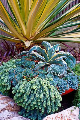 Photograph - Sherman Gardens Study 40 by Robert Meyers-Lussier