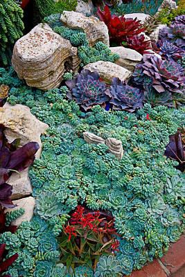 Photograph - Sherman Gardens Study 41 by Robert Meyers-Lussier