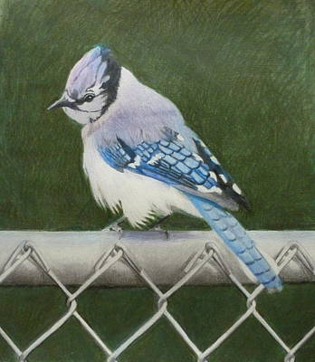 Painting - Sherrie's Bluejay by Constance DRESCHER