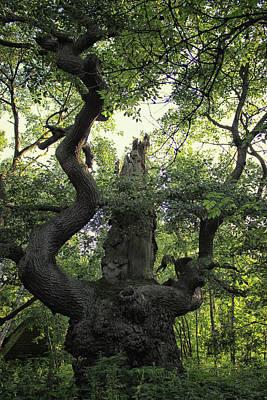Dungeon Wall Art - Photograph - Sherwood Forest by Martin Newman