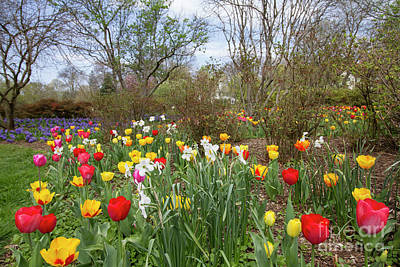 Photograph - Sherwood Gardens 15 by Chris Scroggins