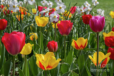 Photograph - Sherwood Gardens 16 by Chris Scroggins