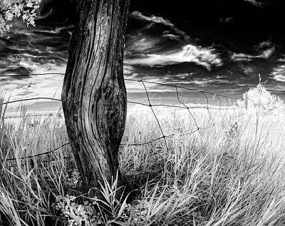 Fence Post Photograph - She's Got Legs by Dan Jurak