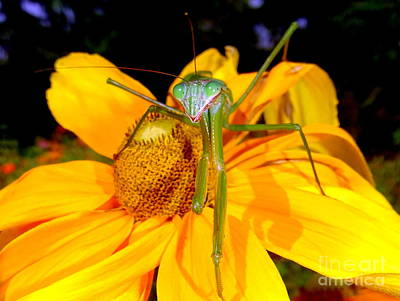 Photograph - Shes Got Praying Mantis Eyes by Ed Weidman