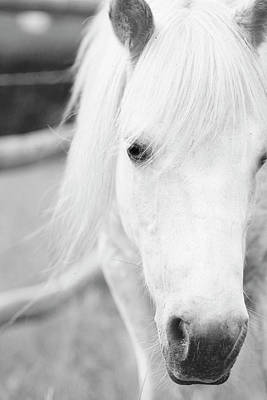 Black Horse Photograph - Shetland Pony by Tina Lee