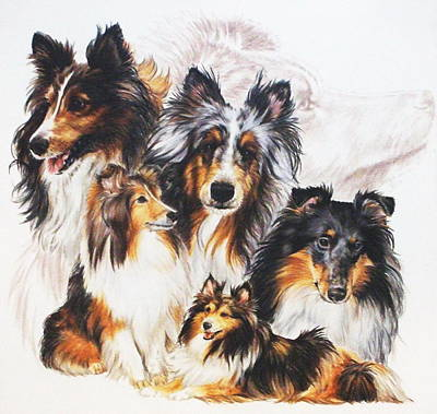 Shetland Sheepdog With Ghost Image Original by Barbara Keith